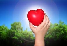 miłości natura Zdjęcie Stock