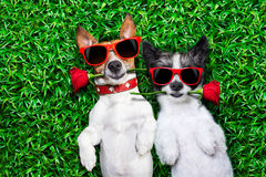 Miłości para psy obraz royalty free