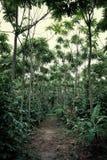 miło uorganizowana robusta kawowa plantacja z palmowymi banana i melonowa drzewami zdjęcia royalty free