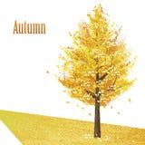 Miłorząb z złotymi liśćmi w opóźnionej jesieni Obrazy Stock