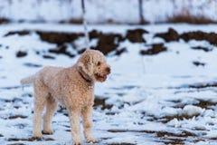 miły pies obraz stock