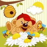 Miś ogląda pszczoły na stokrotce royalty ilustracja