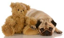 miś pluszowy niedźwiadkowe psie rany Obrazy Royalty Free