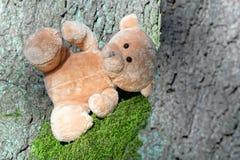 Miś w drewnach obraz stock