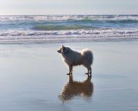 Mi animal doméstico dulce Foto de archivo libre de regalías