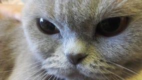 Mi animal doméstico encantador Imágenes de archivo libres de regalías