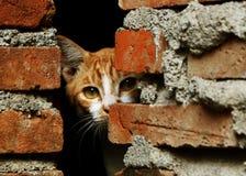 Mi Cat Hiding imágenes de archivo libres de regalías