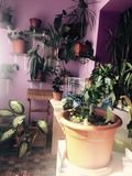 Mi decoración del sitio de las flores Foto de archivo libre de regalías