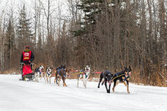 Mi distance Brian Bergen de Beargrease 2015 sur la traînée Photo stock
