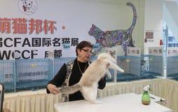 Międzynarodowy kota przedstawienie Obraz Stock