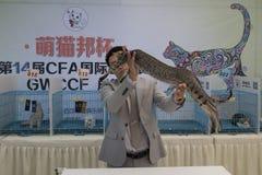 Międzynarodowy kota przedstawienie Obrazy Royalty Free