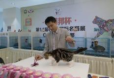 Międzynarodowy kota przedstawienie Obraz Royalty Free