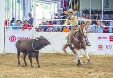 Międzynarodowy Mariachi & Charros festiwal Zdjęcie Royalty Free