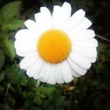 Mi flor foto de archivo