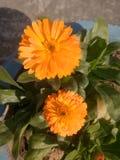 Mi flor imágenes de archivo libres de regalías