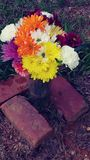 Mi flor de las mamáes para su sepulcro Fotografía de archivo libre de regalías