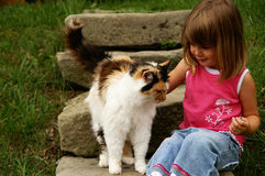 Mi gatito Imagen de archivo libre de regalías