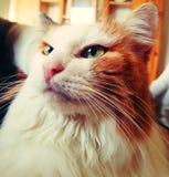 Mi gato foto de archivo