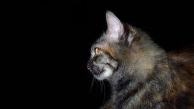 Mi gato foto de archivo libre de regalías