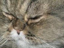 Mi gato Imágenes de archivo libres de regalías
