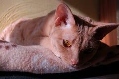 Mi gato Fotos de archivo