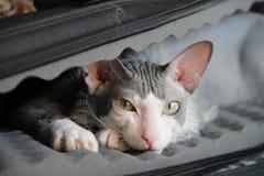 Mi gato Imagen de archivo libre de regalías