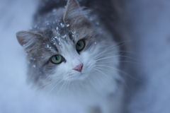 Mi gato agradable y hermoso Fotos de archivo libres de regalías