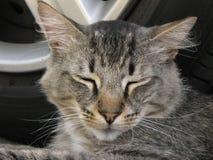 Mi gato cariñoso que mira el gato ferral lejano del somehere, gato elegante Foto de archivo