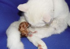 Mi gato consigue al bebé Imagen de archivo libre de regalías