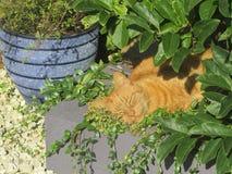Mi gato en casa que duerme en el sol Imagen de archivo libre de regalías