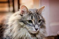 Mi gato hermoso fotografía de archivo libre de regalías
