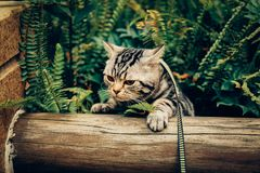 Mi gato, Levi fotos de archivo