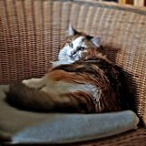 Mi gato maravilloso imagen de archivo