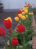 Mi jardín Fotos de archivo