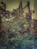 Mi jardín Imagen de archivo libre de regalías