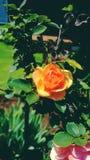 Mi jardín es imagen de archivo libre de regalías