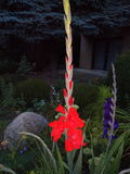 Mi jardín del verano Imagen de archivo libre de regalías