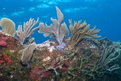 Miękcy korale na wraku Obraz Royalty Free