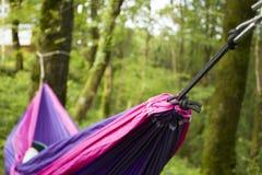 Miękki hamak na drzewach w lesie Zdjęcie Royalty Free