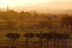 Miękki Karoo krajobraz Zdjęcie Royalty Free