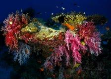 Miękki koral Obrazy Stock