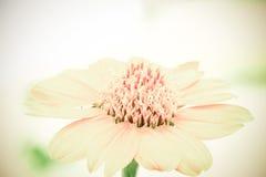 Miękki rocznika koloru brzmienie kwiat Zdjęcia Stock