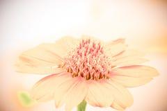 Miękki rocznika koloru brzmienie kwiat Fotografia Stock