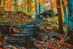 Miękki widok jesieni krajobraz, jesienny park, spadek natura Zdjęcia Stock