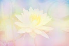 Miękkiej plamy Lotosowy kwiat w pastelowych kolorów cukierki tle Zdjęcia Royalty Free