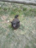 Mi kulia del perro negro foto de archivo libre de regalías