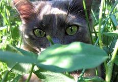 Mi muchacha brumosa de ojos verdes foto de archivo