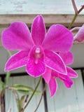 Mi orquídea fotos de archivo
