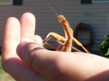 Mi pequeño amigo imagen de archivo