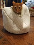 Mi pequeño gato del jengibre fotos de archivo libres de regalías